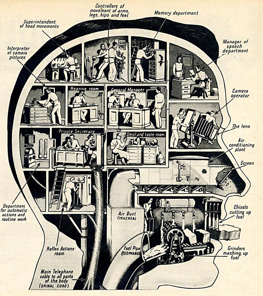 MEME – Diseño – Fritz Khan: maravillas dentro de la cabeza
