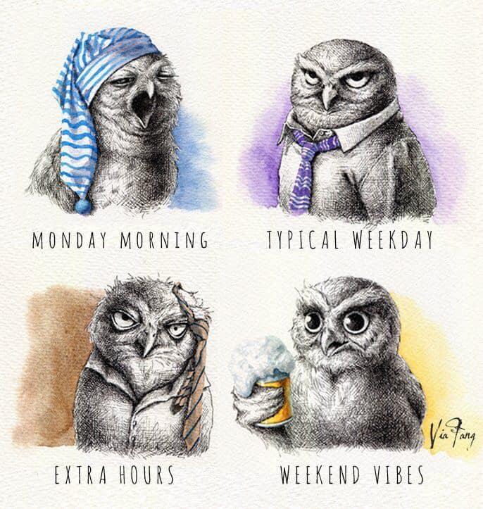 Meme – Ilustración – Búhos para toda la semana