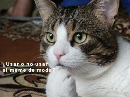Meme – Gatos culturales – Existencialismo de moda